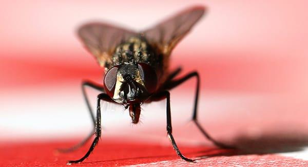 a house fly in a south portland home during the holiday season