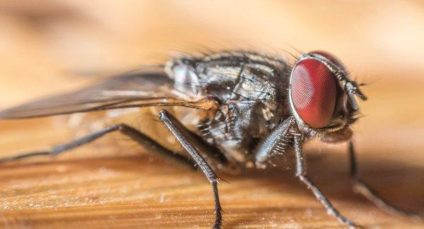 a house fly on a wooden table