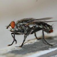 a house fly on a kitchen surface