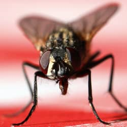 house fly on picnic table