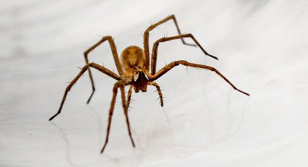 a house spider on white surface