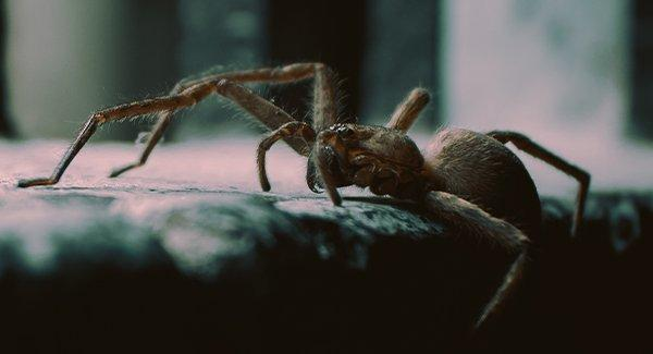 close up view of a spider on a table