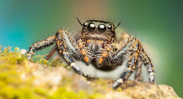 a jumping spider in a garden