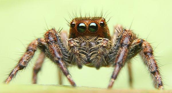 a close up of a jumping spider