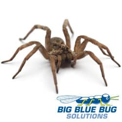 Spider Control In Rhode Island and Massachusetts
