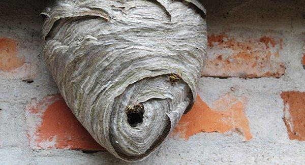 a large wasp nest
