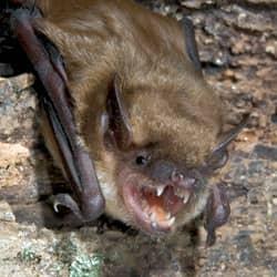 bat in providence