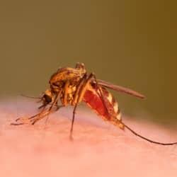 mosquito biting rhode island resident