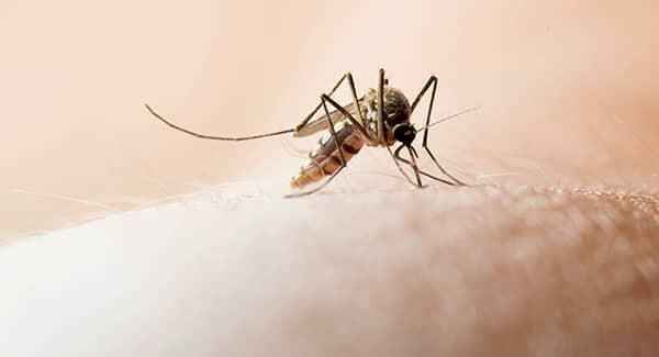 a mosquito biting the bare skin of a worcester massachusetts resident