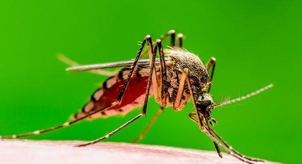 mosquito biting skin of finger
