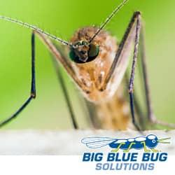 mosquito in providence ri