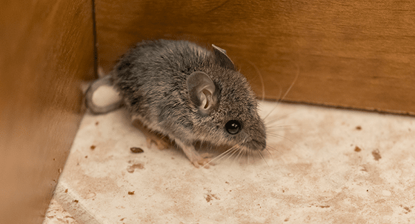 mouse in corner