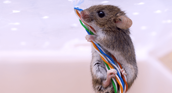 mouse climbing wires