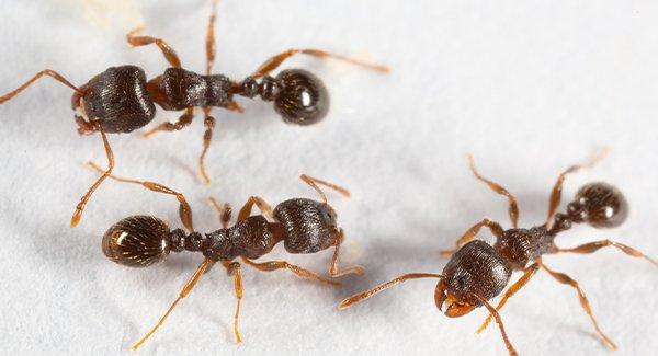 several ants on a kitchen floor