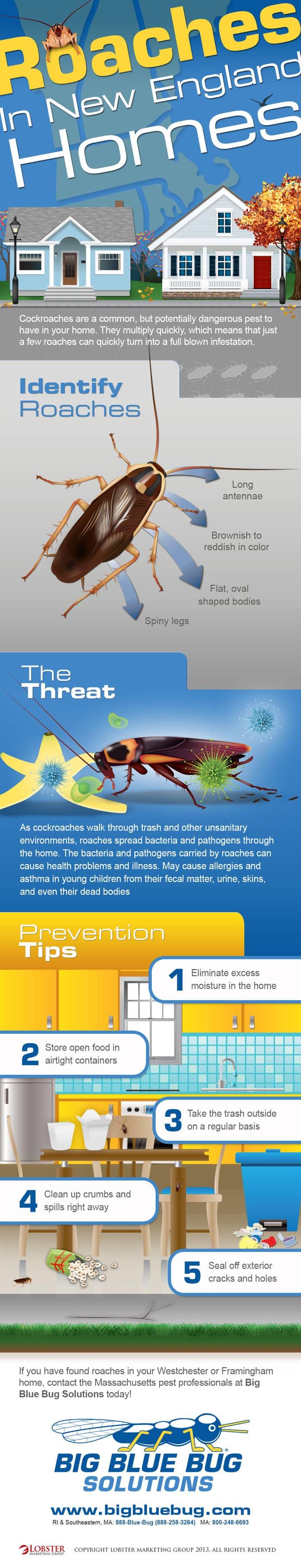 Prevent Cockroaches In Massachusetts