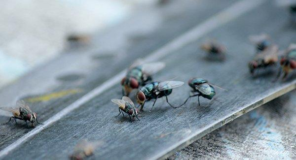 several flies in kitchen