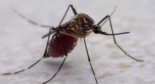 close up of mosquito on table