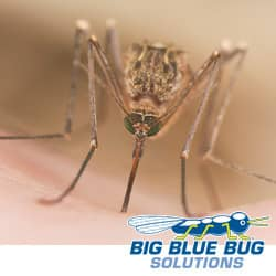 mosquito found in rhode island