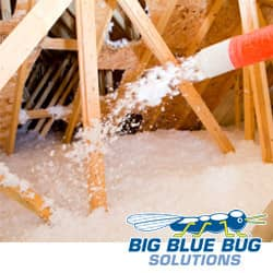 Pest Control Insulation in Rhode Island