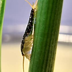 silverfish climbing on house plant
