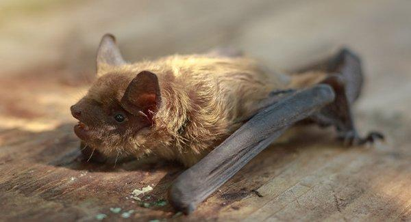 a small brown bat crawling on a roof
