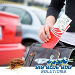 avoid bed bugs while on spring break vacation