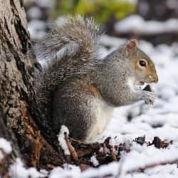 squirrel sitting next to tree in winter