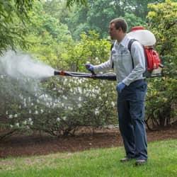 mosquito service
