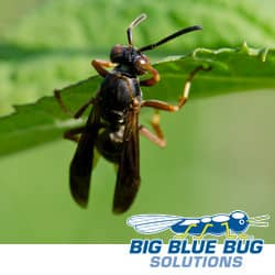 a wasp on a leaf in rhode island