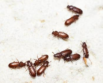 pantry pests found in south portland home