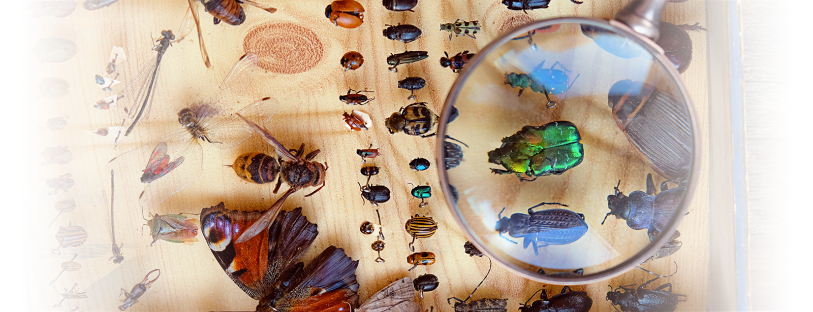 a magnifying glass over several different kinds of pests in shrewsbury massachusetts