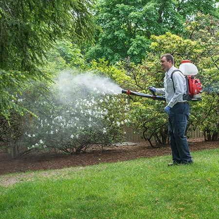 mosquito control technician treating a rhode island lawn