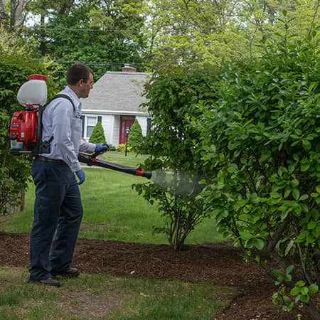 mosquito and tick tech spraying a massachusetts yard