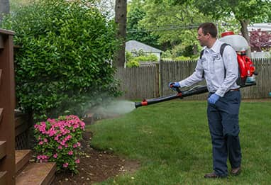 mosquito control technician treating a home in massachusetts