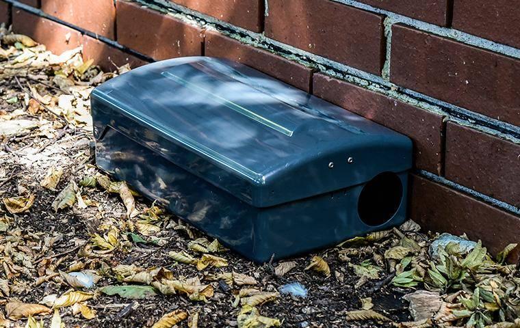 a rodent bait box