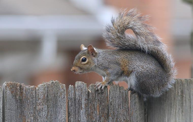 squirrel on fence outside of a home