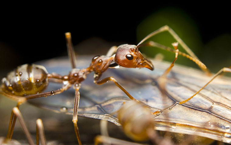 a fire ant outside a home