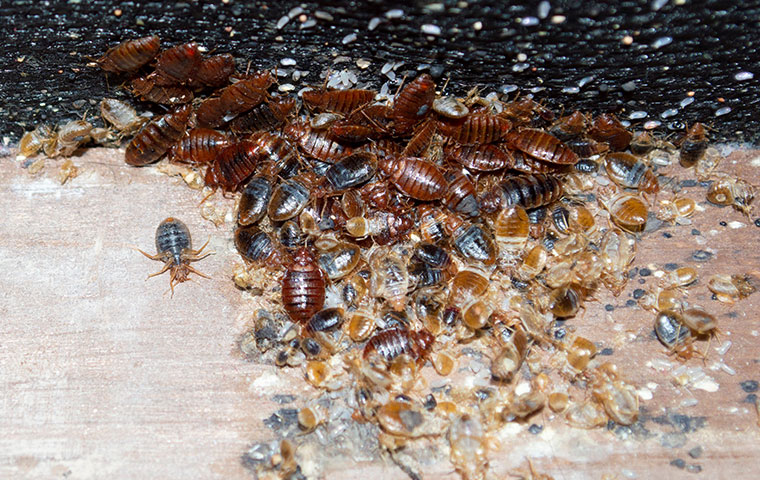 a large group of bed bugs crawling on a mattress