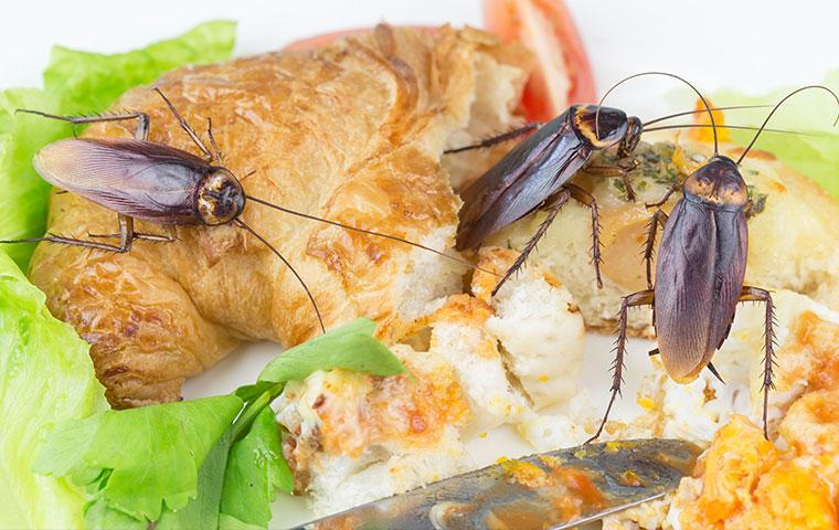 three cockroaches on a sandwich