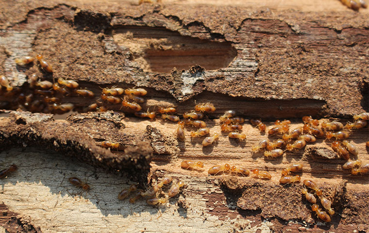 Termite Treatment Cost - What You Should Know!
