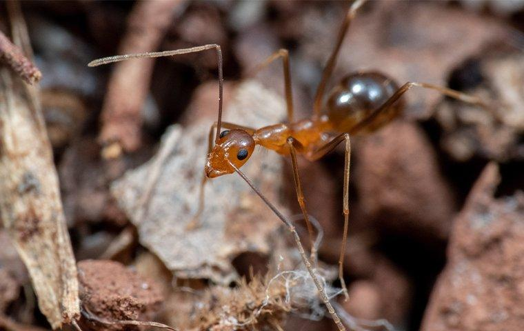 an ant crawling on the ground outside of a home on east caicos