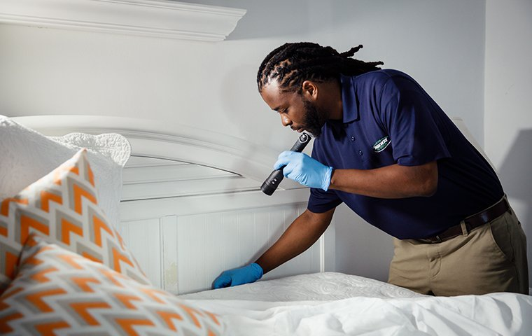 bed bug inspection in home on middle caicos island
