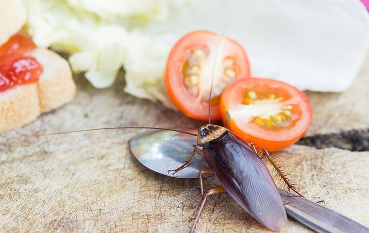 cockroach in kitchen on spoon