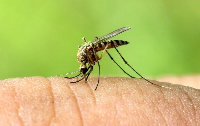 a mosquito biting a persons finger at their home on grand turk island