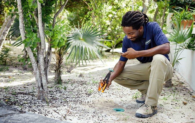 termite sentricon station inspection outside of a home on south caicos island