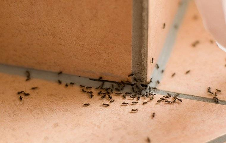 ants in bathroom