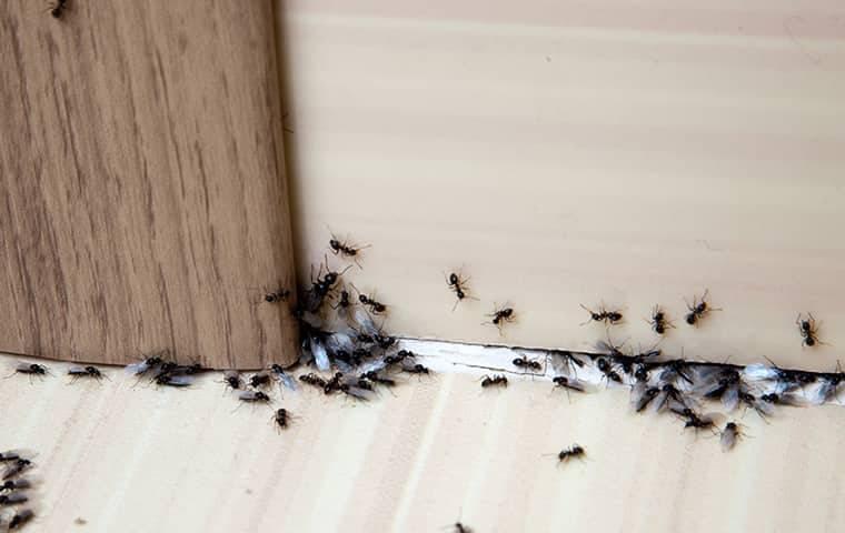 ants crawling under doorway