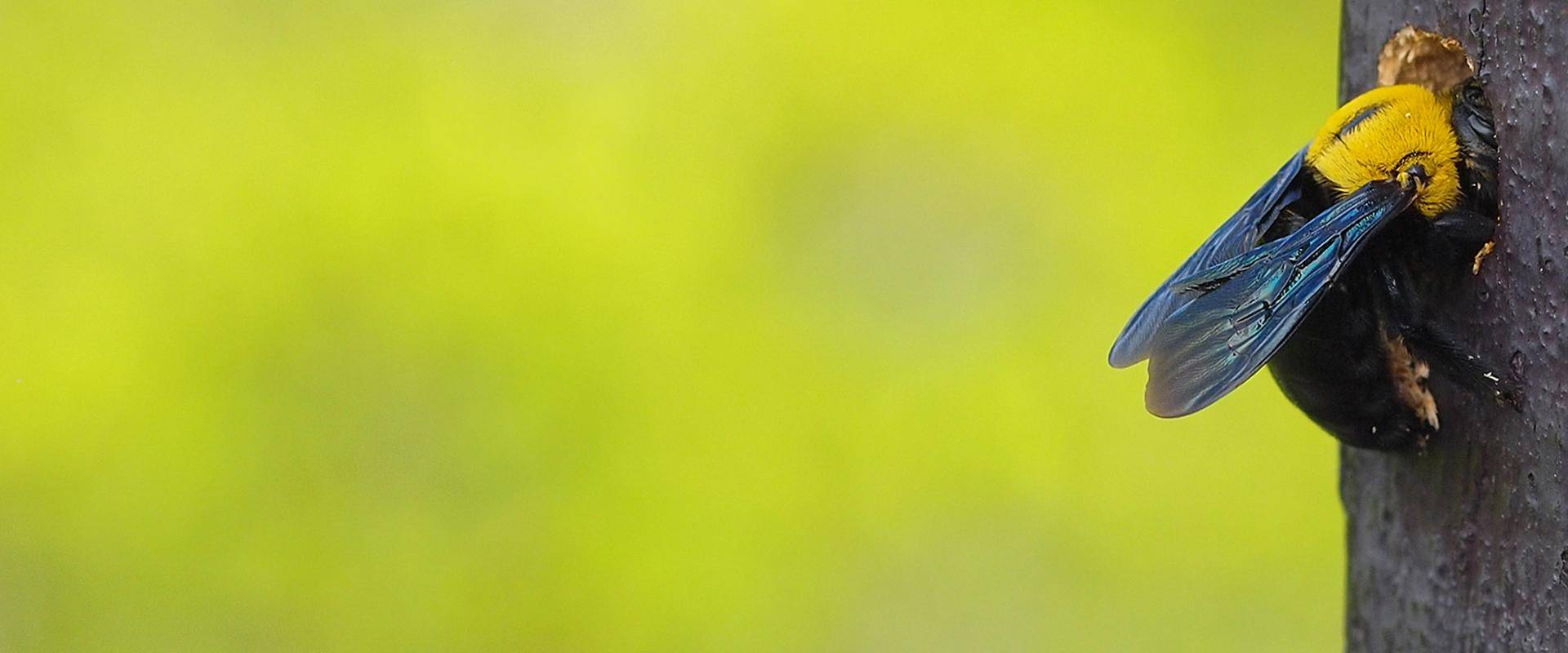 a bee on a tree mesa arizona