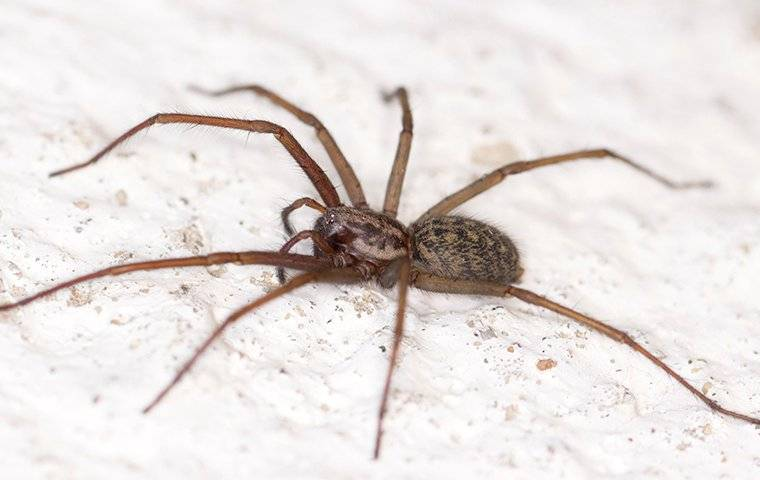 spider in a glendale house