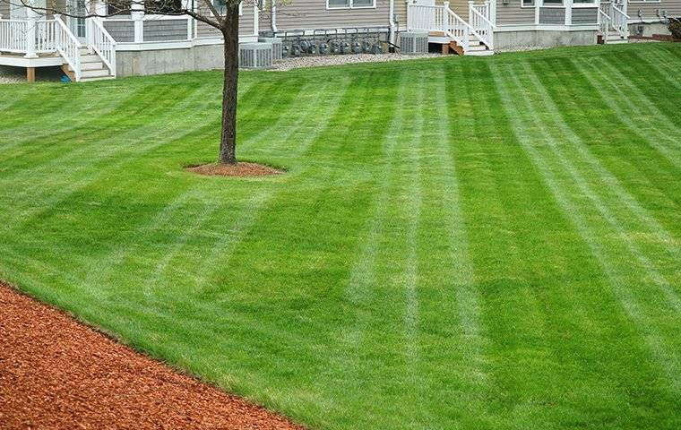 a beautiful freshly mowed lawn